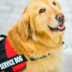 The Problem With Service Dogs…