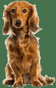 Cute_Dog_PNG_Clip_Art-2488-190x300