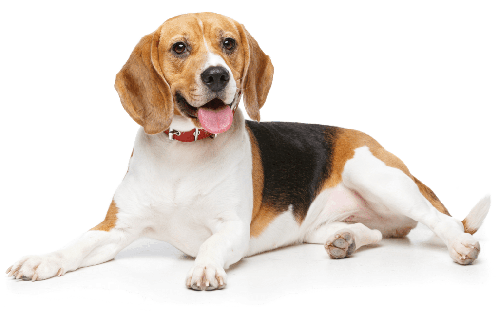 dog-smile