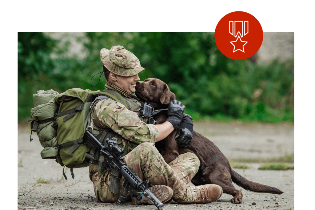 veteran-dog